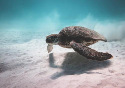 Op welke Griekse eilanden kun je schildpadden bekijken?